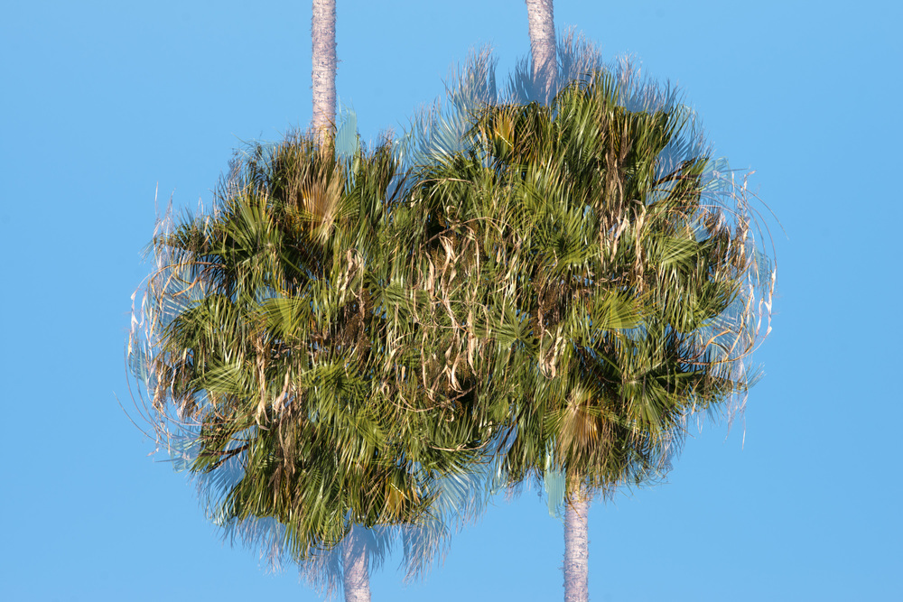 Palms I , 2014 Archival Pigment Print 27 x 40 inches