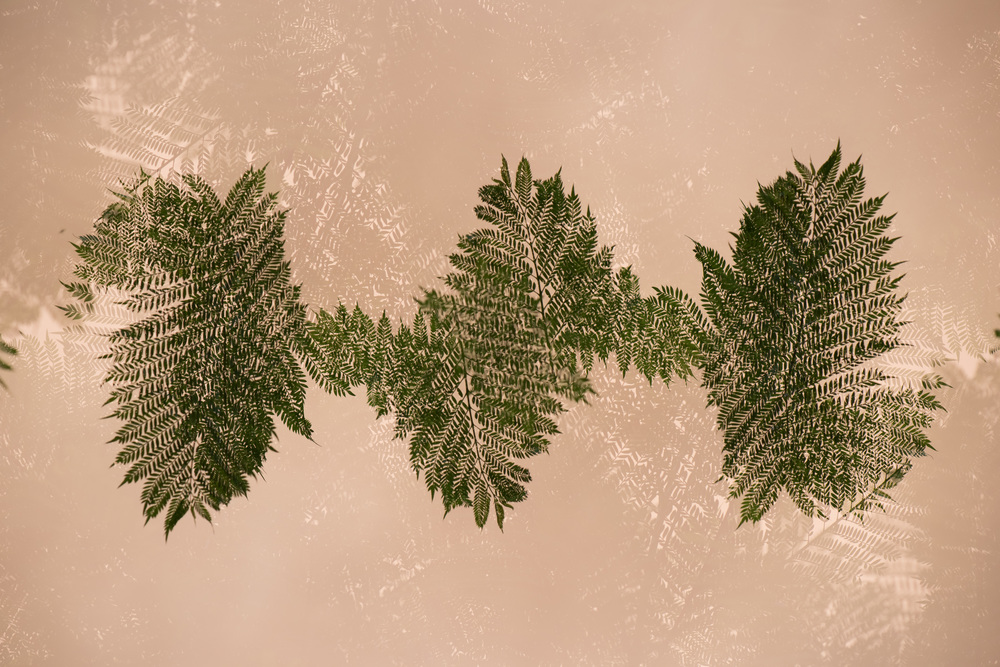 Leaves II , 2016 Archival pigment print 27x40 Inches