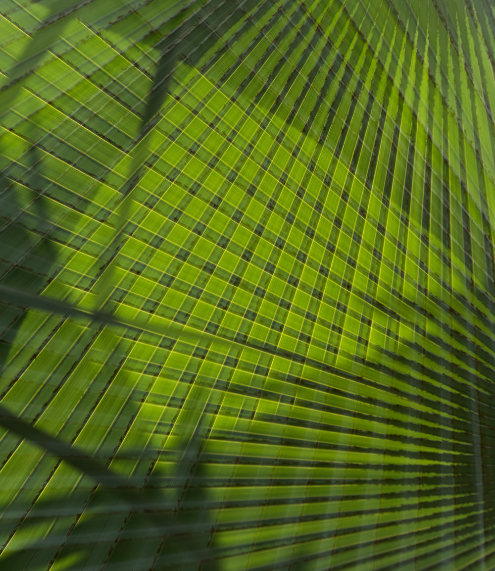 Green Grid,  2016 Archival Pigment Print 20 x 25 inches