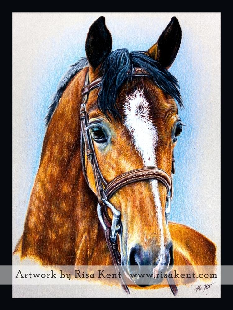 Risa-Kent-Horse-Portrait-Colored-Pencil