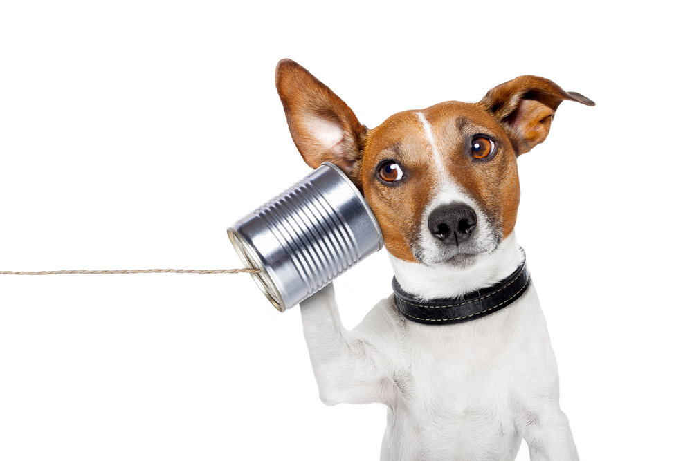 Copy of dog on the phone
