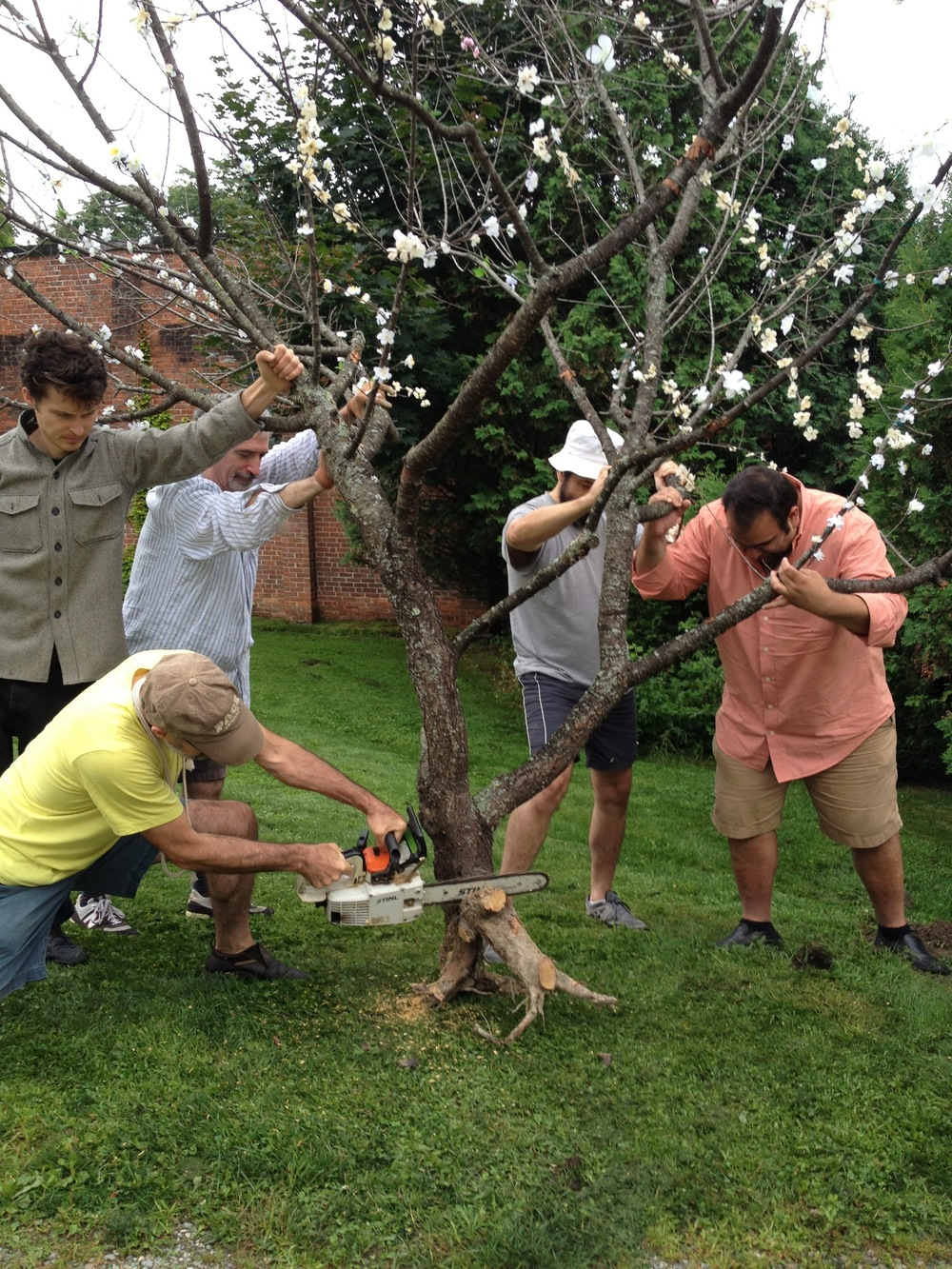 Company members install a real cherry tree that was resurrected with silk blossoms for The Cherry Orchard – one example of LRT's dedication to making theatre simple yet specific.