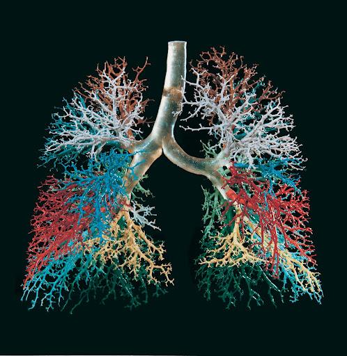 fractal lung.jpg