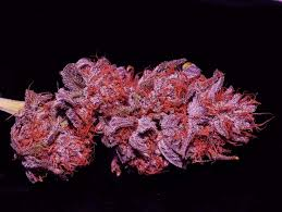 purple cannabis