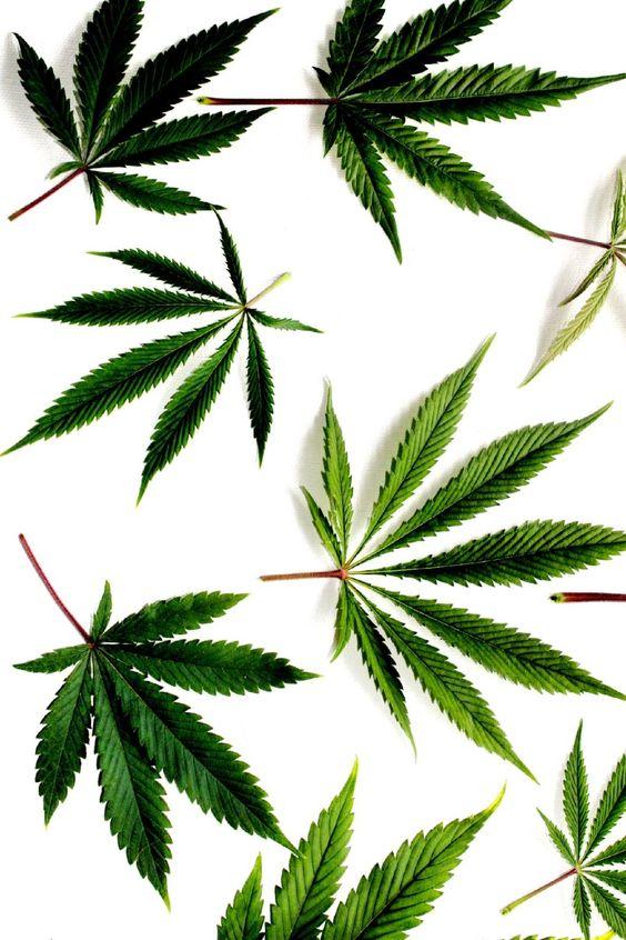 clean weed.jpg