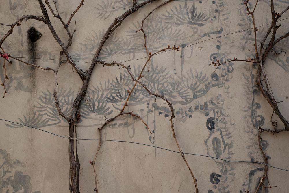 Wall in Li Caiping's courtyard.