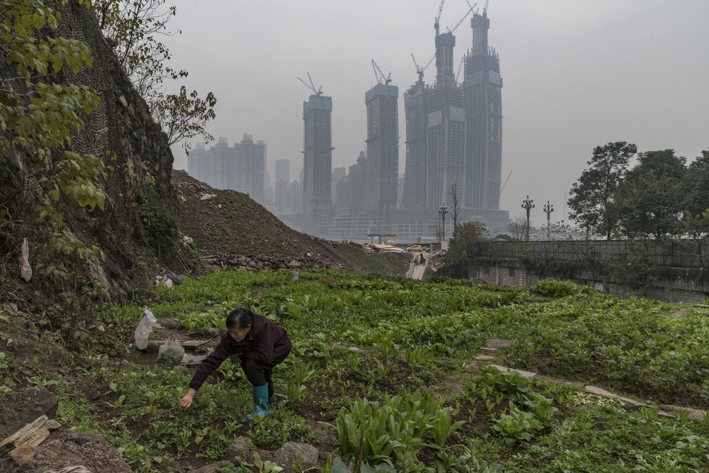 A woman tending to a vegetable garden with a giant real estate project, the 1.12 million square meters Chongqing Raffles City,  looming behind her. This project will redefine the megalopolis skyline.