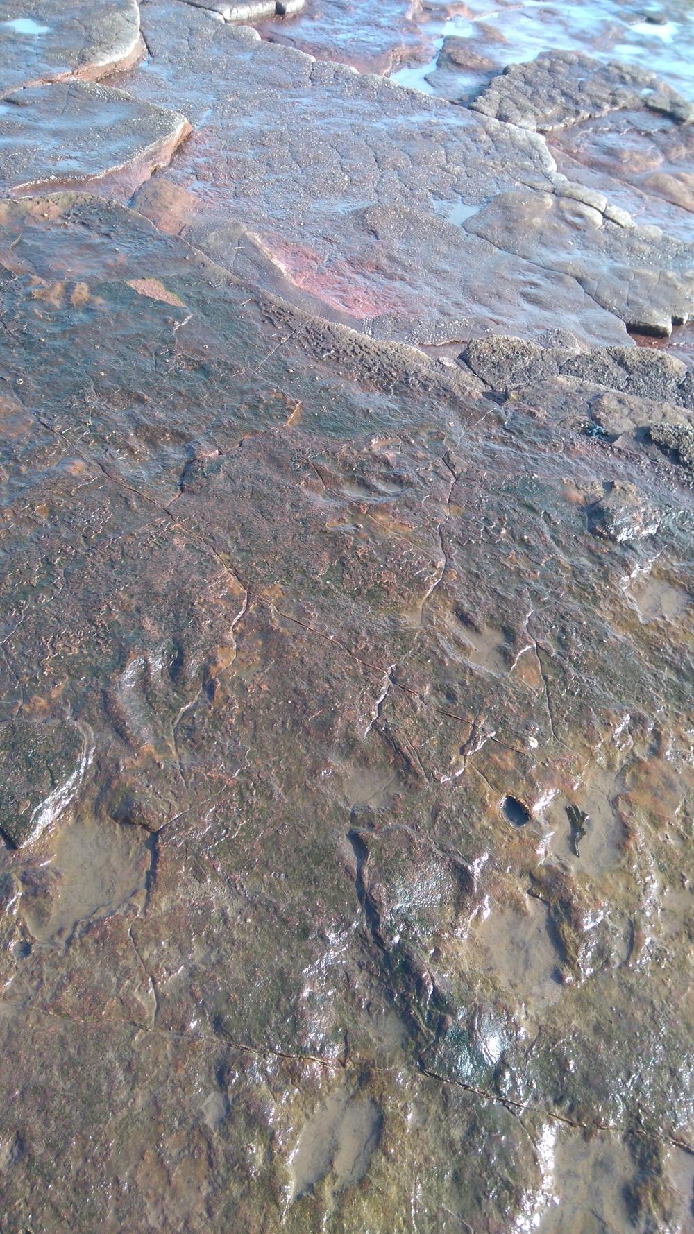 Dinosaur footprints on the Vale of Glamorgan Coast