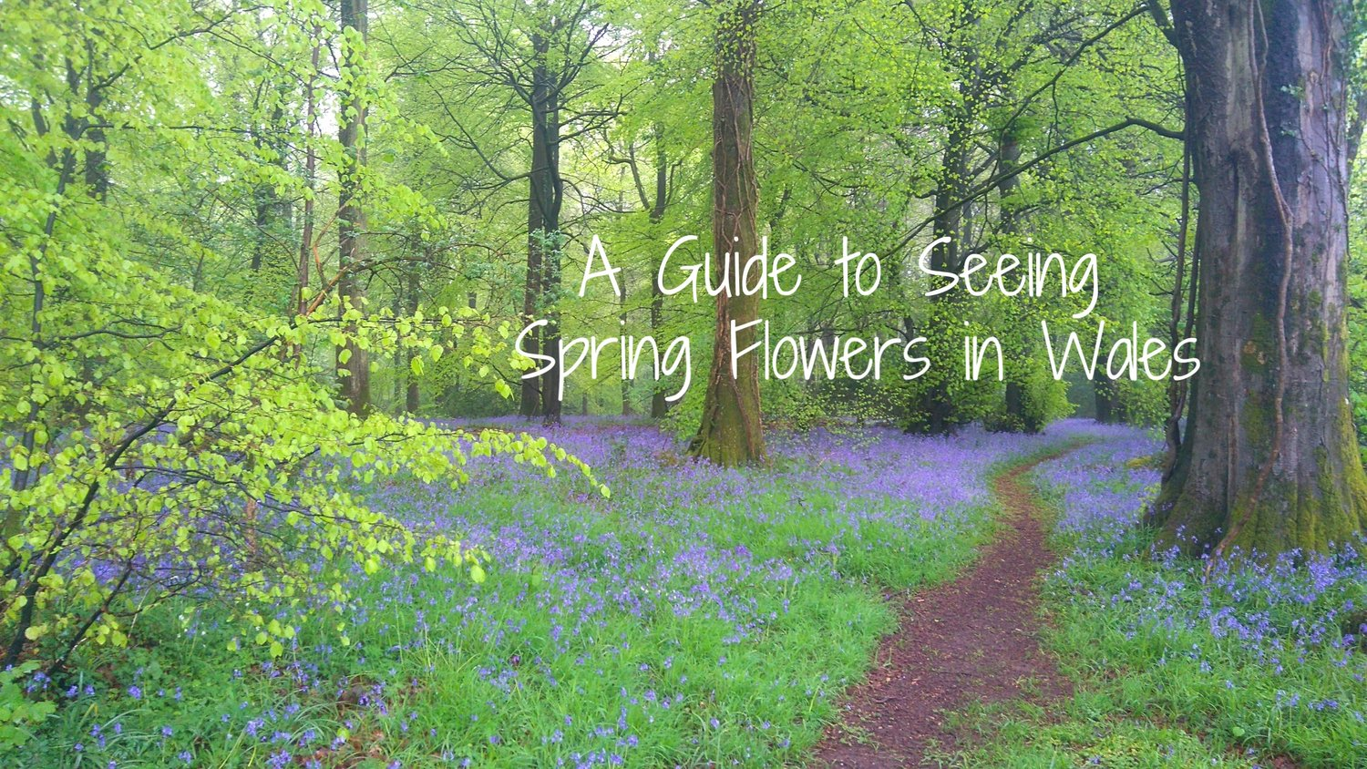 A Guide To Seeing Spring Flowers In Wales Real Wales Tours