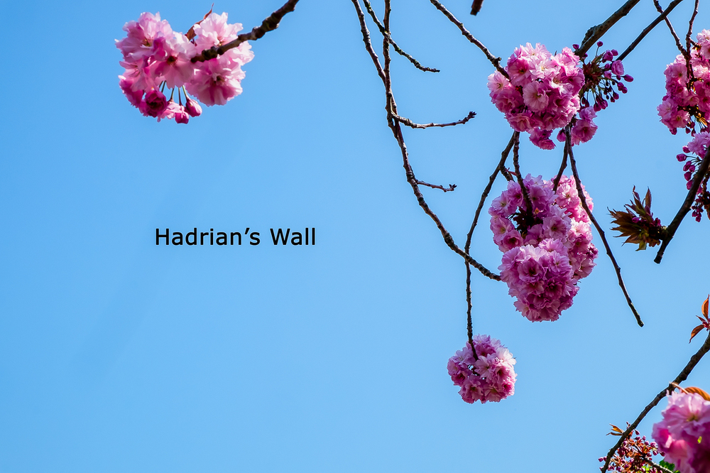 Hadrian's Wall00001.jpg