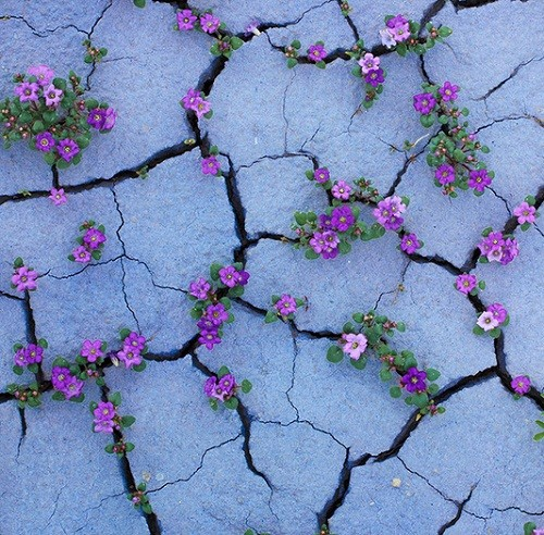 Plants-growing-through-concrete-walls-stones-and-asphalt-500x492.jpg