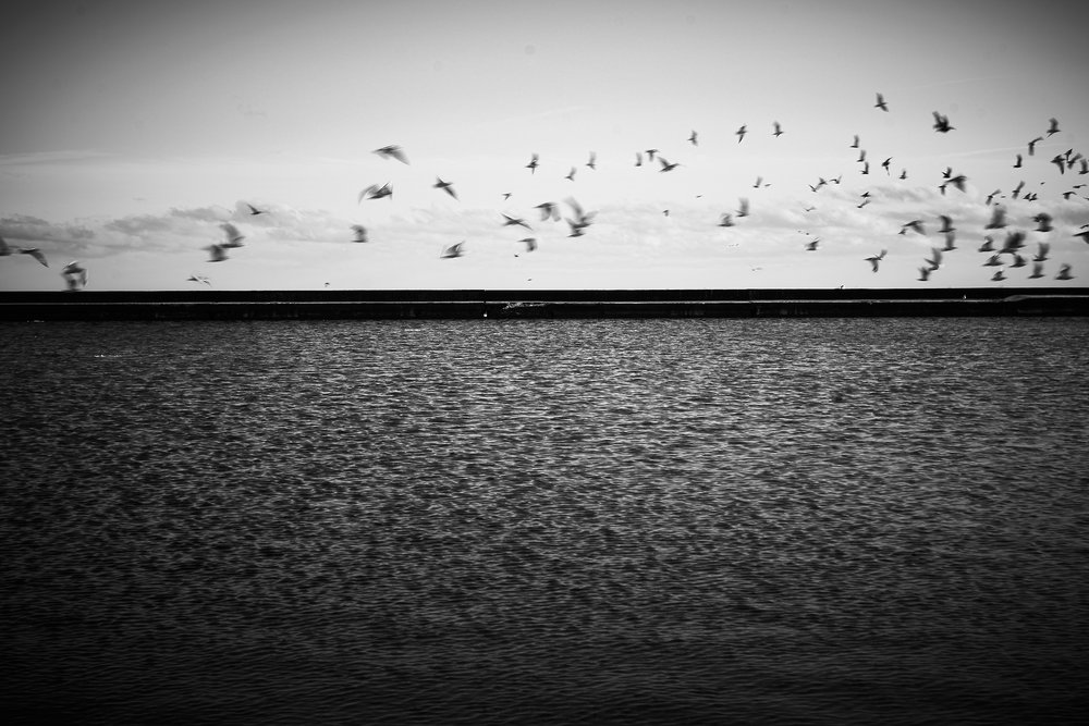 Lakeshore-DSC07098.jpg