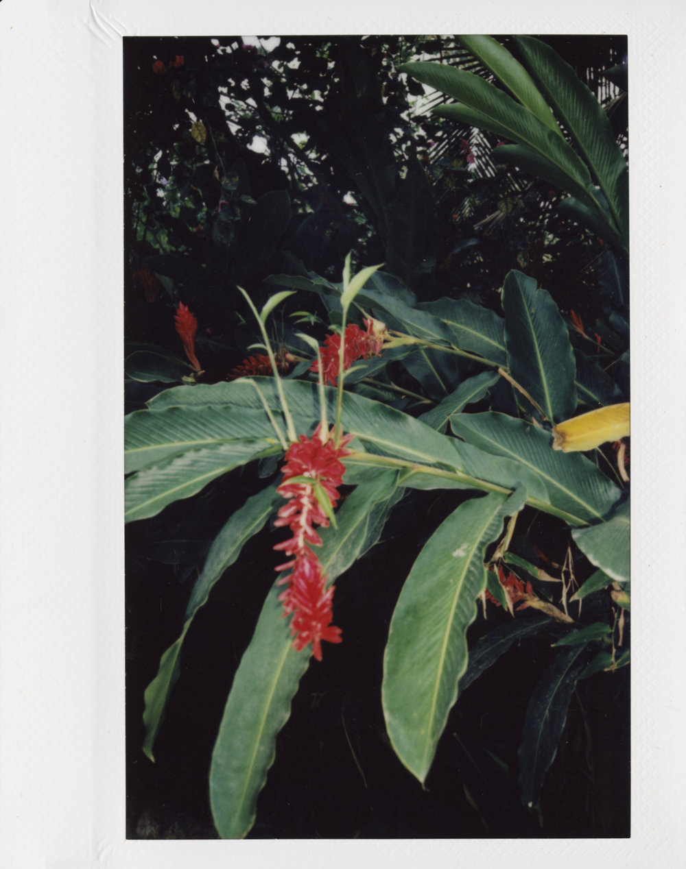 Colombia_Flower_05.jpg