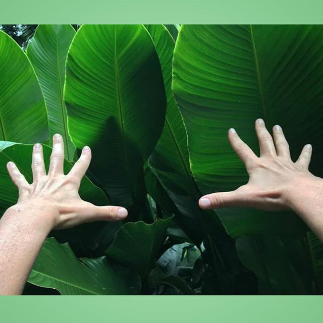 Nature itself is the best physician.  __________________________________________________ #hippocrates #heal #takeyourmedicine #nature #green #absorb #leaves #naruresmedicine #recharge #zen #rejuvenate #reset #energize #greenvibes #radiate #latergram #hike #island #photooftheday #vsco #instagood #inspire #nourish #hands #refuel #massagebystaci #holistic #source #oxygen #inhale