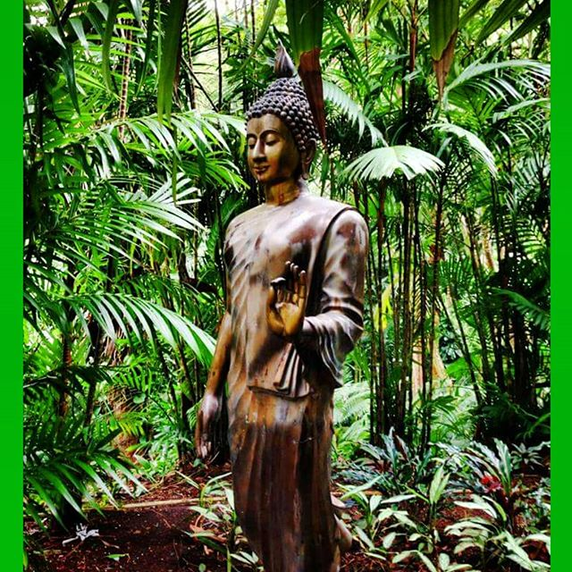 Talk less. Listen more. Feel deeper. Love better. Open your eyes. Experience life. Thank you for sharing this image @jahraerodz.  ___________________________________________________ #buddha #green #sync #tropical #forest #photooftheday #grow #nourish #photooftheday #awaken #vsco #island #hike #temple #gold #zen #massagebystaci #latergram #lush #alive #photooftheday #energize #sync