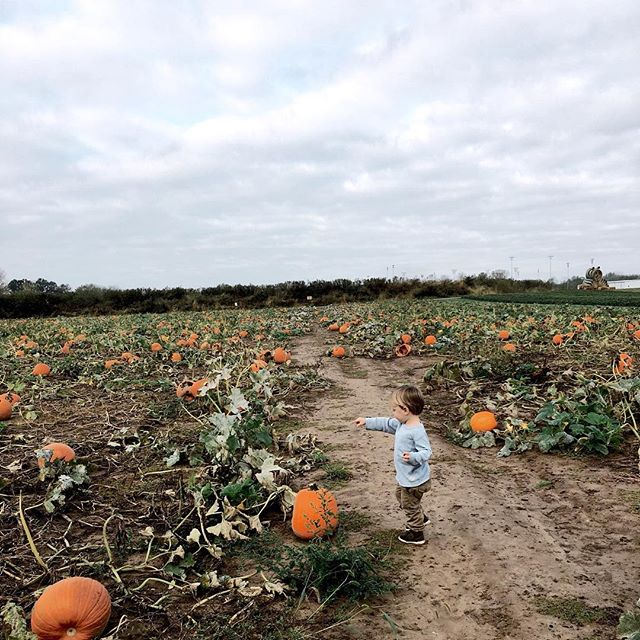 """Today Pier was well enough to make it to MDO (🎉). Except we drove all the way there and mama forgot that it's fall break and there's no school (🤦🏼♀️). So, I threw out my perfectly planned morning and decided to be fun and drive to the pumpkin patch for Pier. He is obsessed with """"punkids"""" and had to pat each and every one 😂. This is him showing me the """"bigggg punkid"""". #ourlastindianafall"""