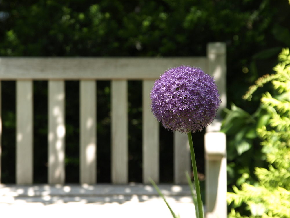 flower-in-front-of-bench.jpg
