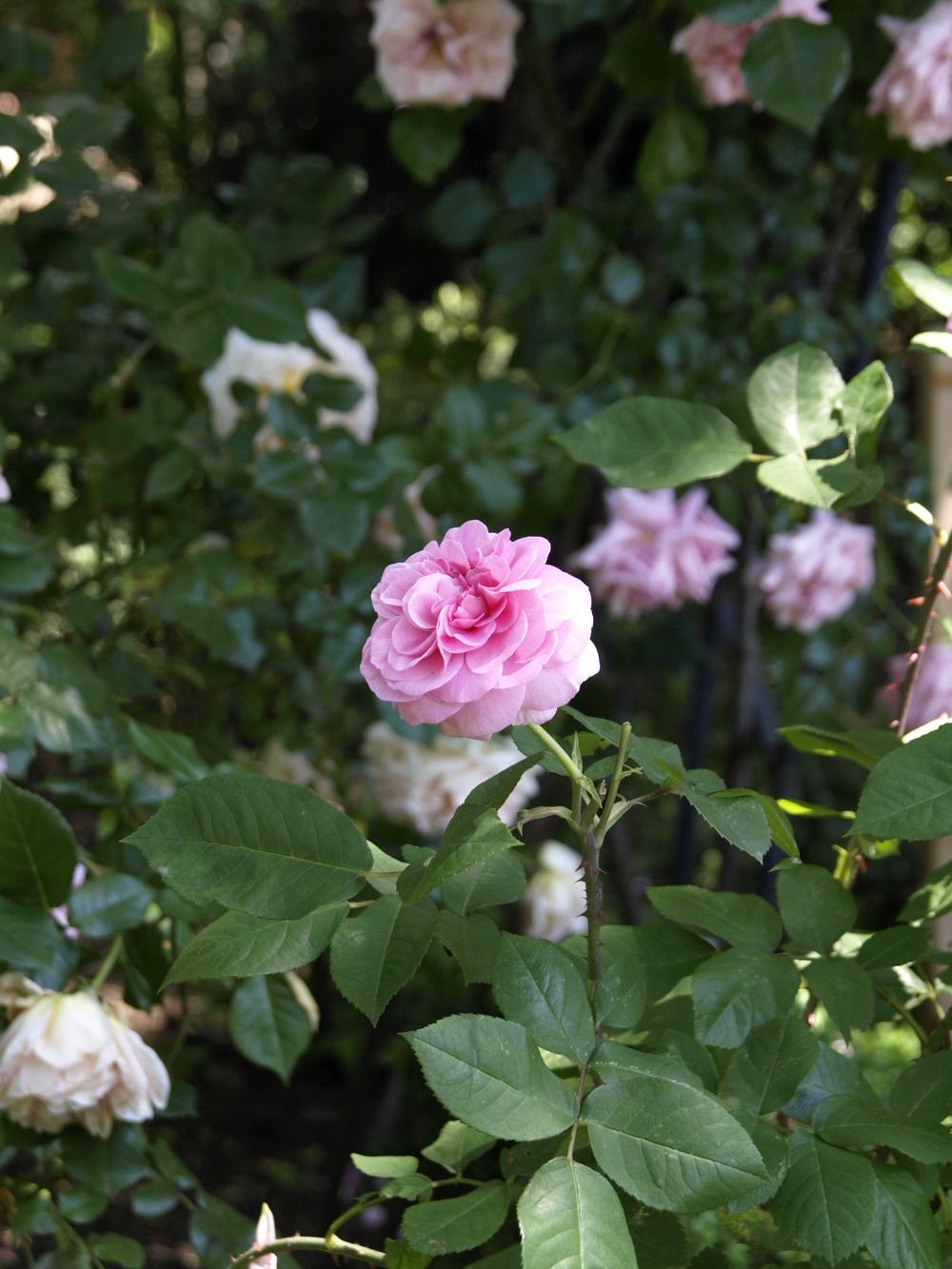 pink-flower.jpg