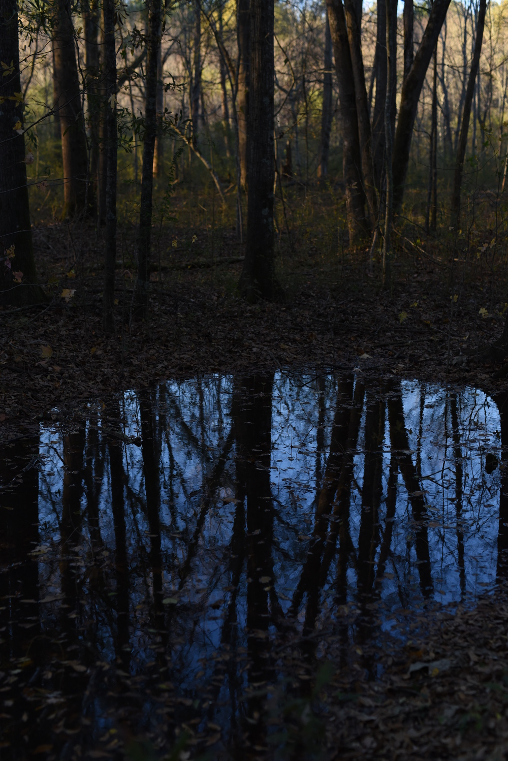 reflection-of-trees.jpg