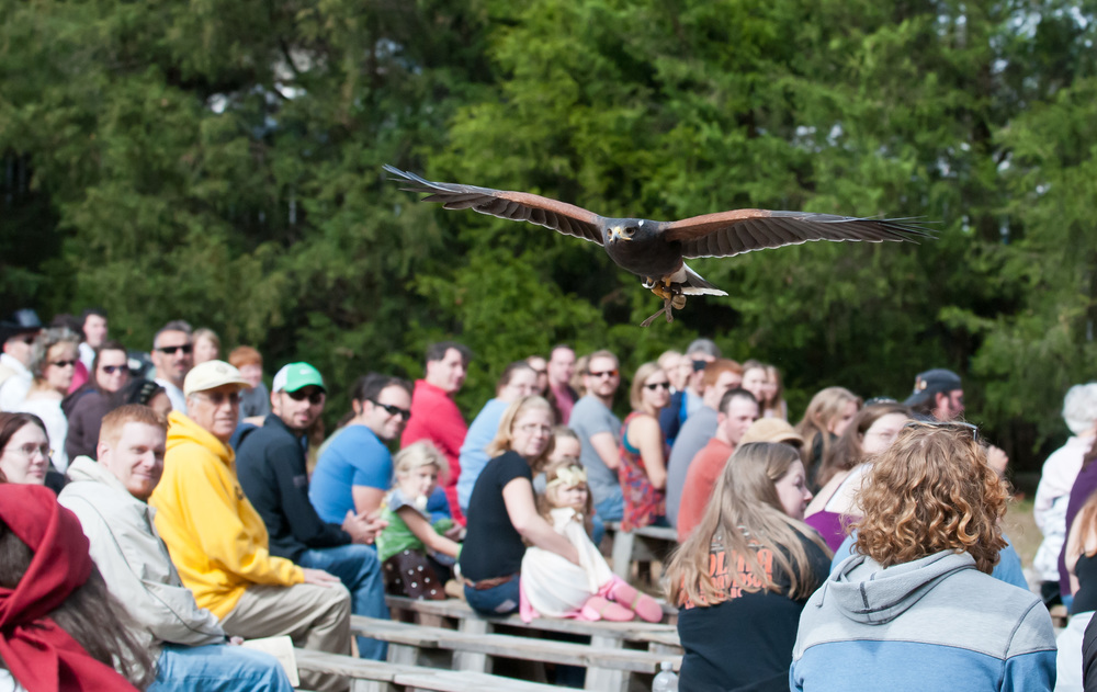 Live Falconry Demonstrations!