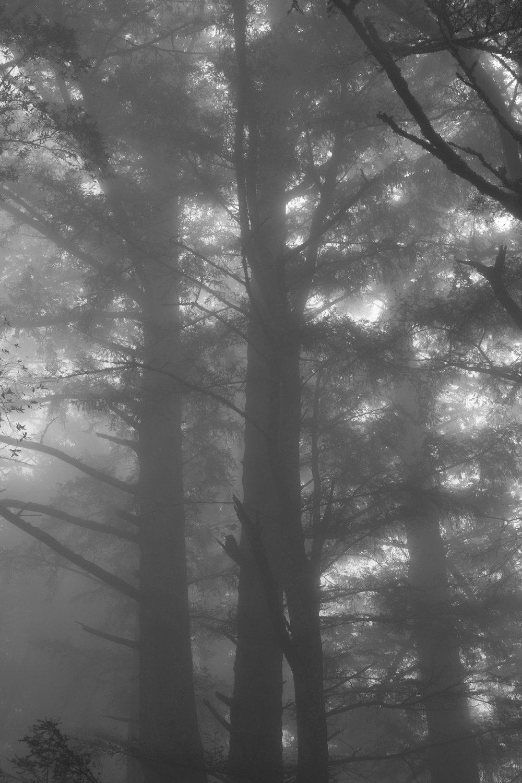 fogline_51.jpg
