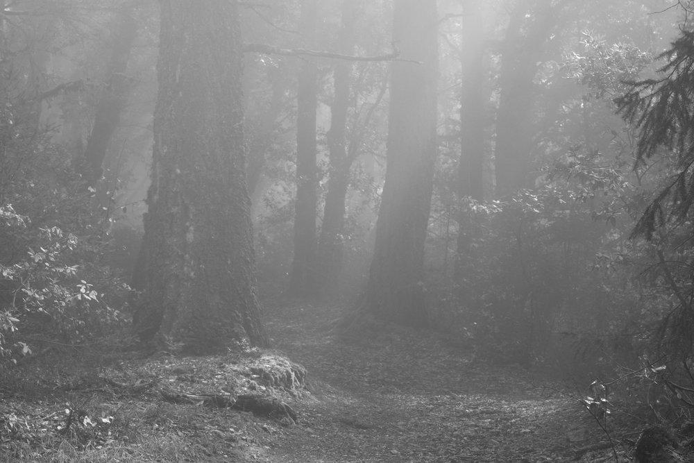 fogline_55.jpg