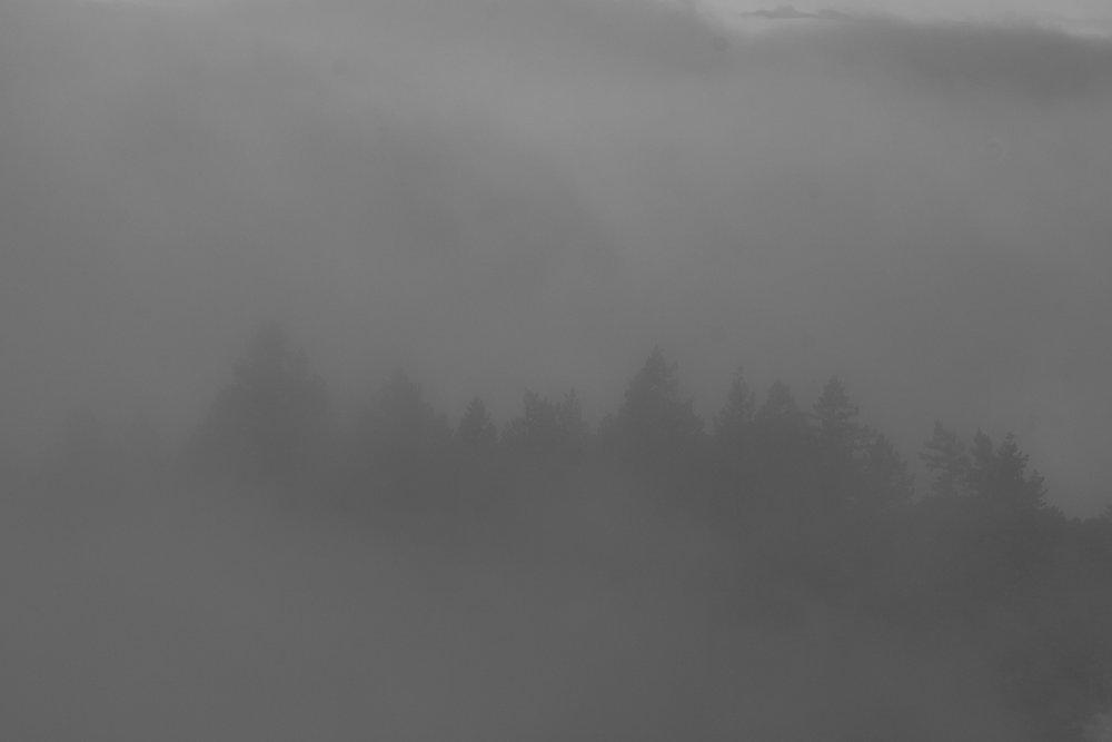 fogline_65.jpg