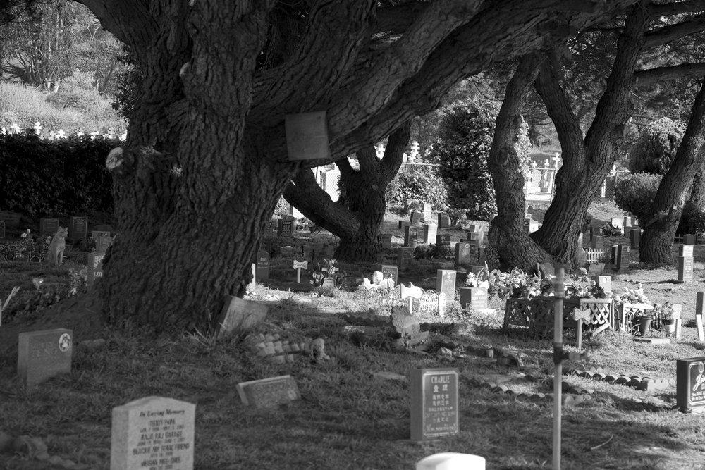 Dead Animals_6.jpg