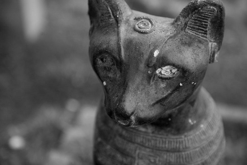 Dead Animals_42.jpg