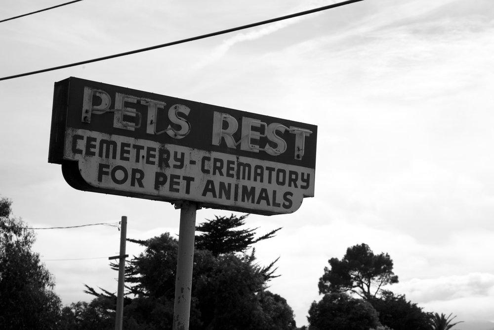 Dead Animals_71.jpg