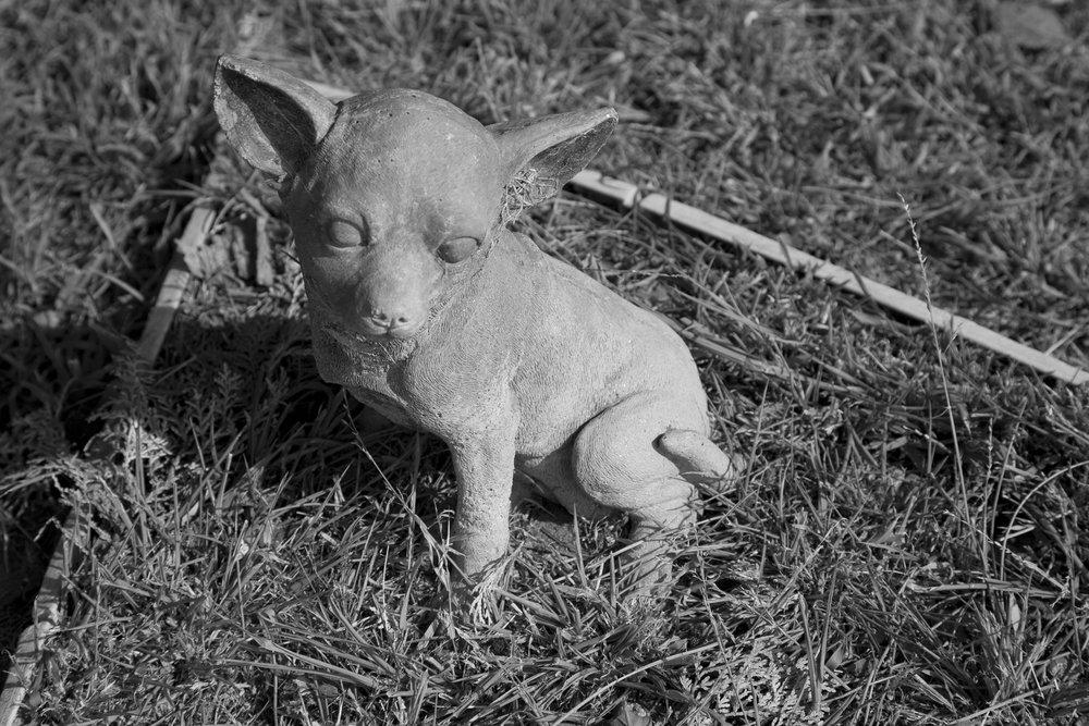Dead Animals_70.jpg