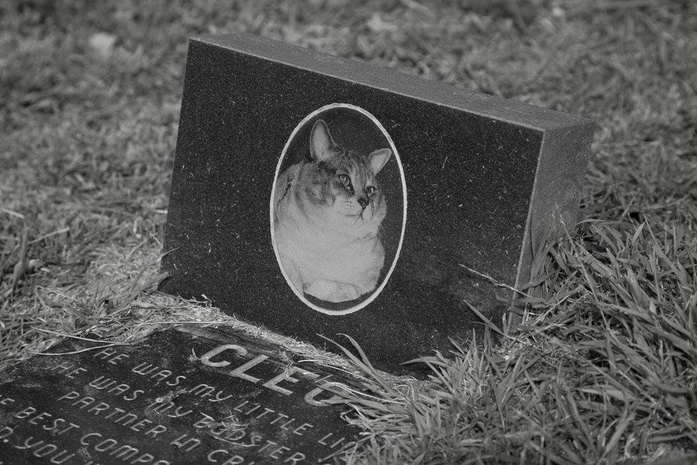 Dead Animals_53.jpg