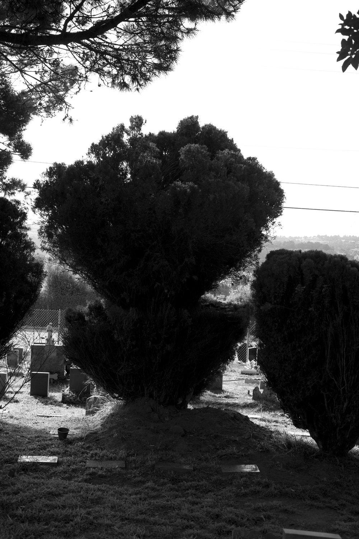 Dead Animals_35.jpg