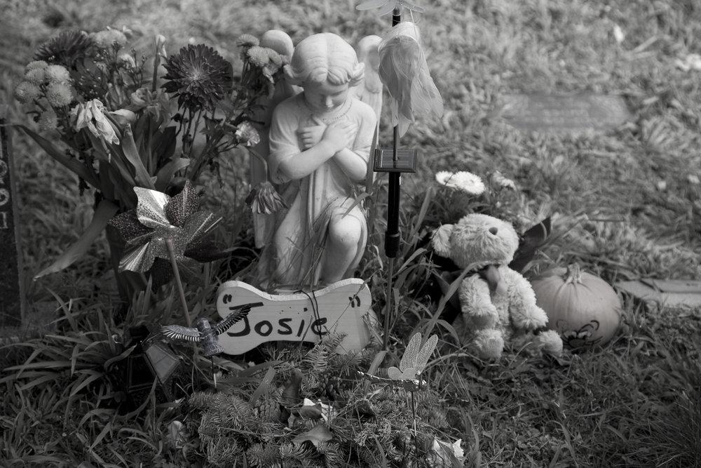 Dead Animals_30.jpg