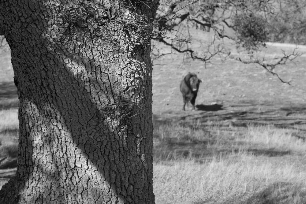 Henry W. CoeOhlone Wilderness_39.jpg
