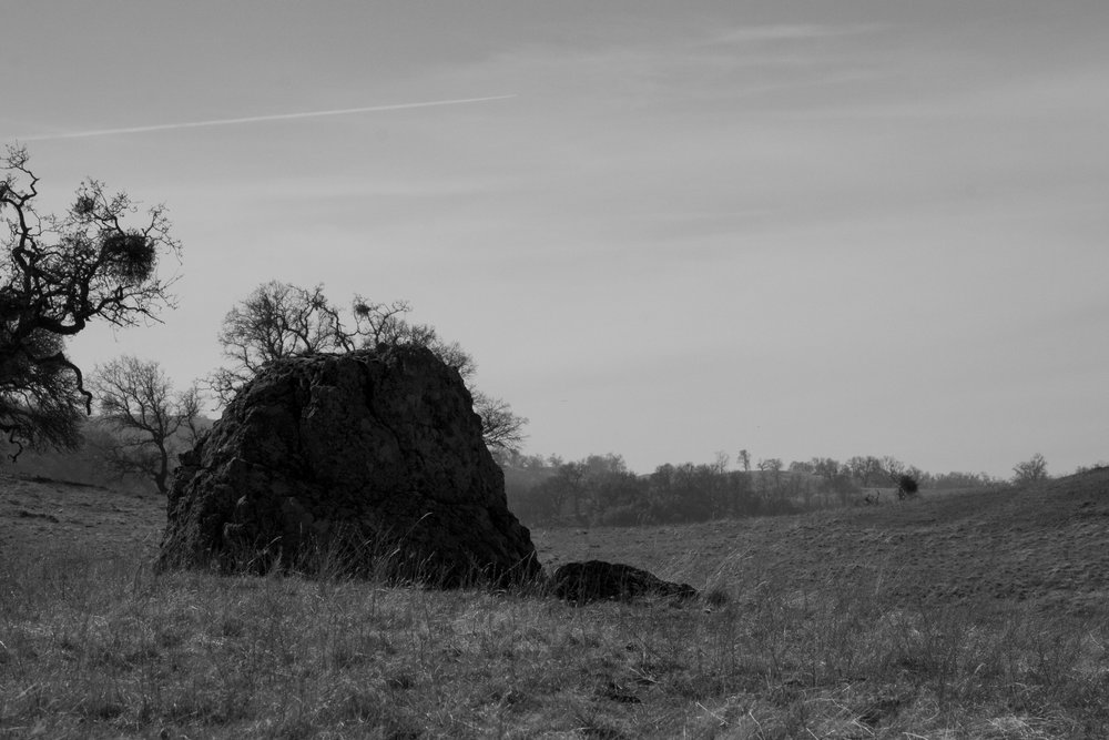 Henry W. CoeOhlone Wilderness_46.jpg