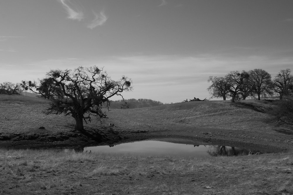Henry W. CoeOhlone Wilderness_47.jpg