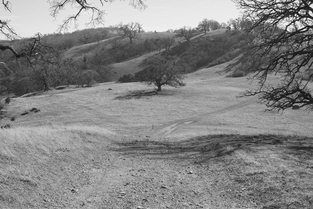 Henry W. CoeOhlone Wilderness_44.jpg