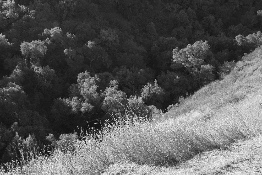 Henry W. CoeOhlone Wilderness_79.jpg