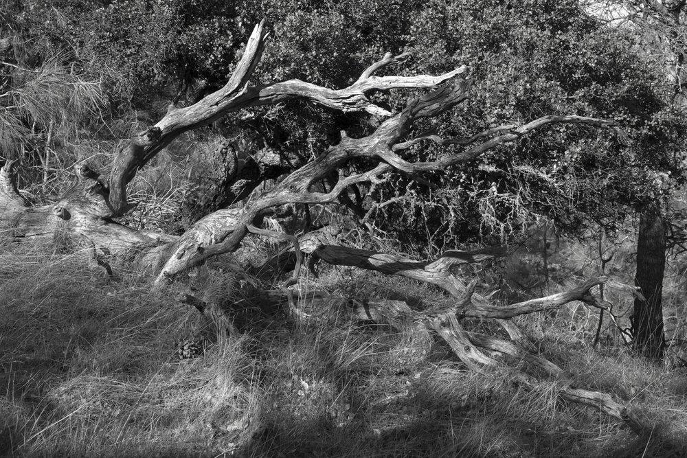 Henry W. CoeOhlone Wilderness_104.jpg