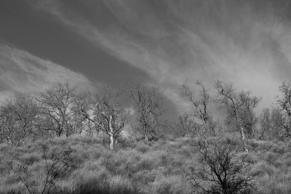 Henry W. CoeOhlone Wilderness_89.jpg