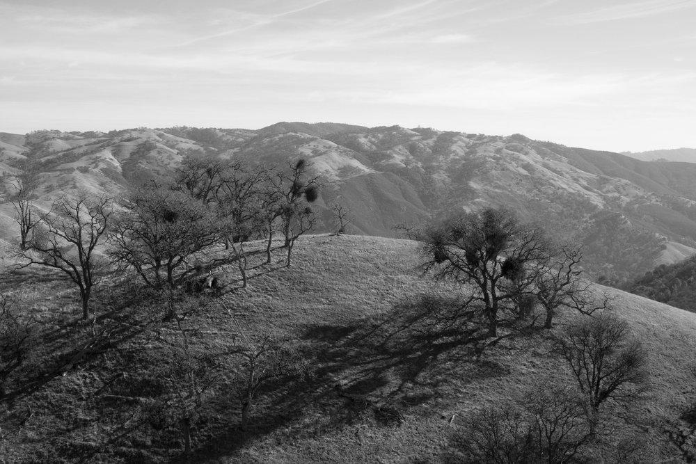Henry W. CoeOhlone Wilderness_120.jpg