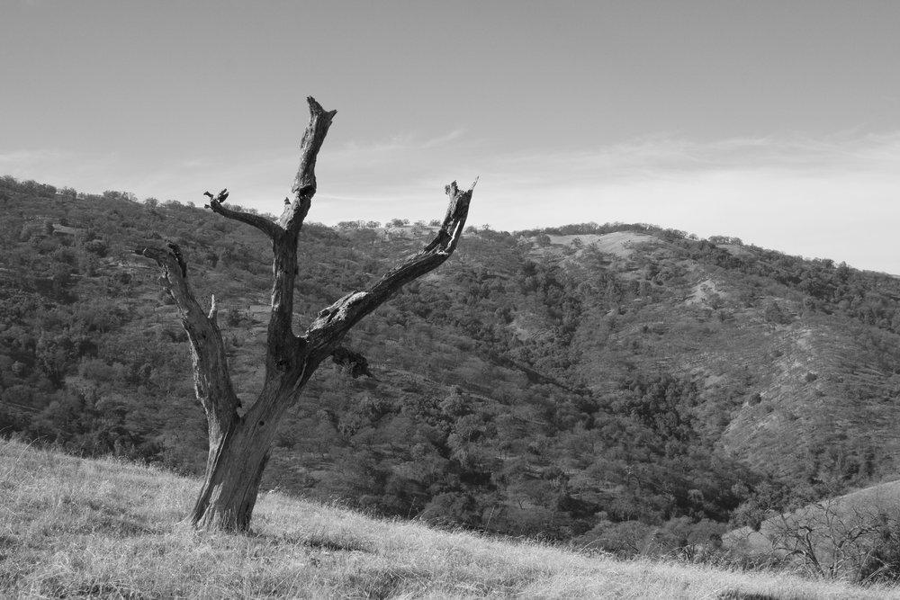 Henry W. CoeOhlone Wilderness_125.jpg