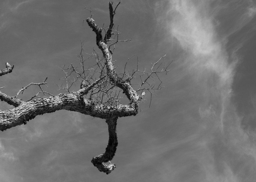 Henry W. CoeOhlone Wilderness_156.jpg