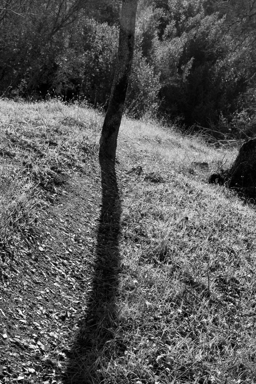 Henry W. CoeOhlone Wilderness_152.jpg
