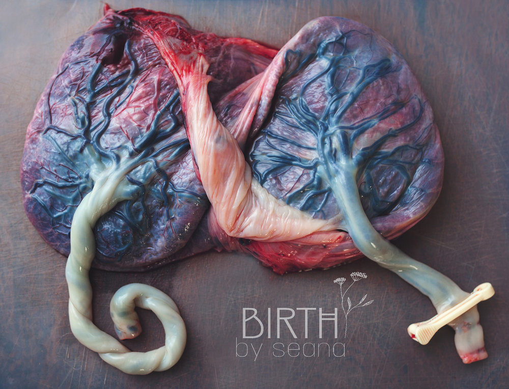 Babymoon Birth Services / www.facebook.com/Doula.Seana
