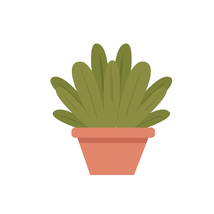 plant-2841719_960_720.jpg