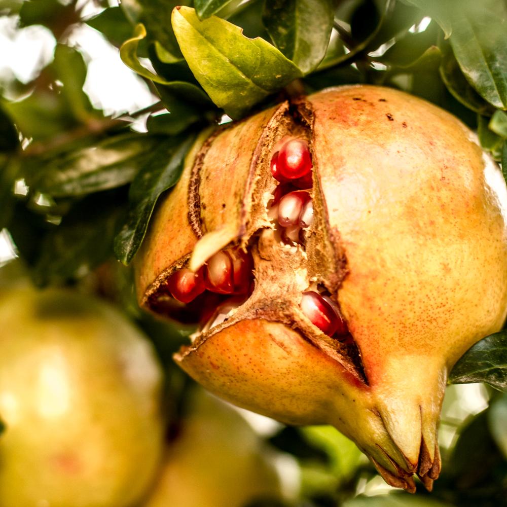 ripening.jpg