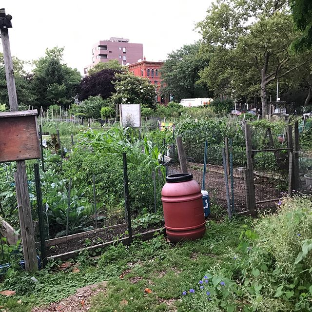 Thank you so much for the tour of this incredible oasis in the heart of Brooklyn at Hattie Carthan Community Garden! #goodleafsmoothies #thegoodleaf #organic #organicfood #smoothie #smoothies #greensmoothie #smoothiebowl #nutrition #garden #fruit #vegetables #vegan #vegetarian #nyc #brooklyn #bedstuy #diet #wellness #weightloss #nutrition #yoga #gym #fit #fitness #health #healthy #healthyfood