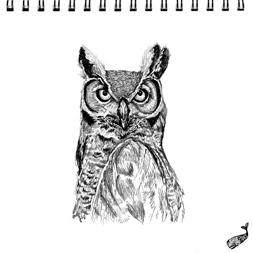 30-OWL.jpg